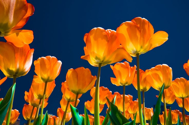 Orange Spring Flowers Wallpapers Spring Themes Pinterest 736x490
