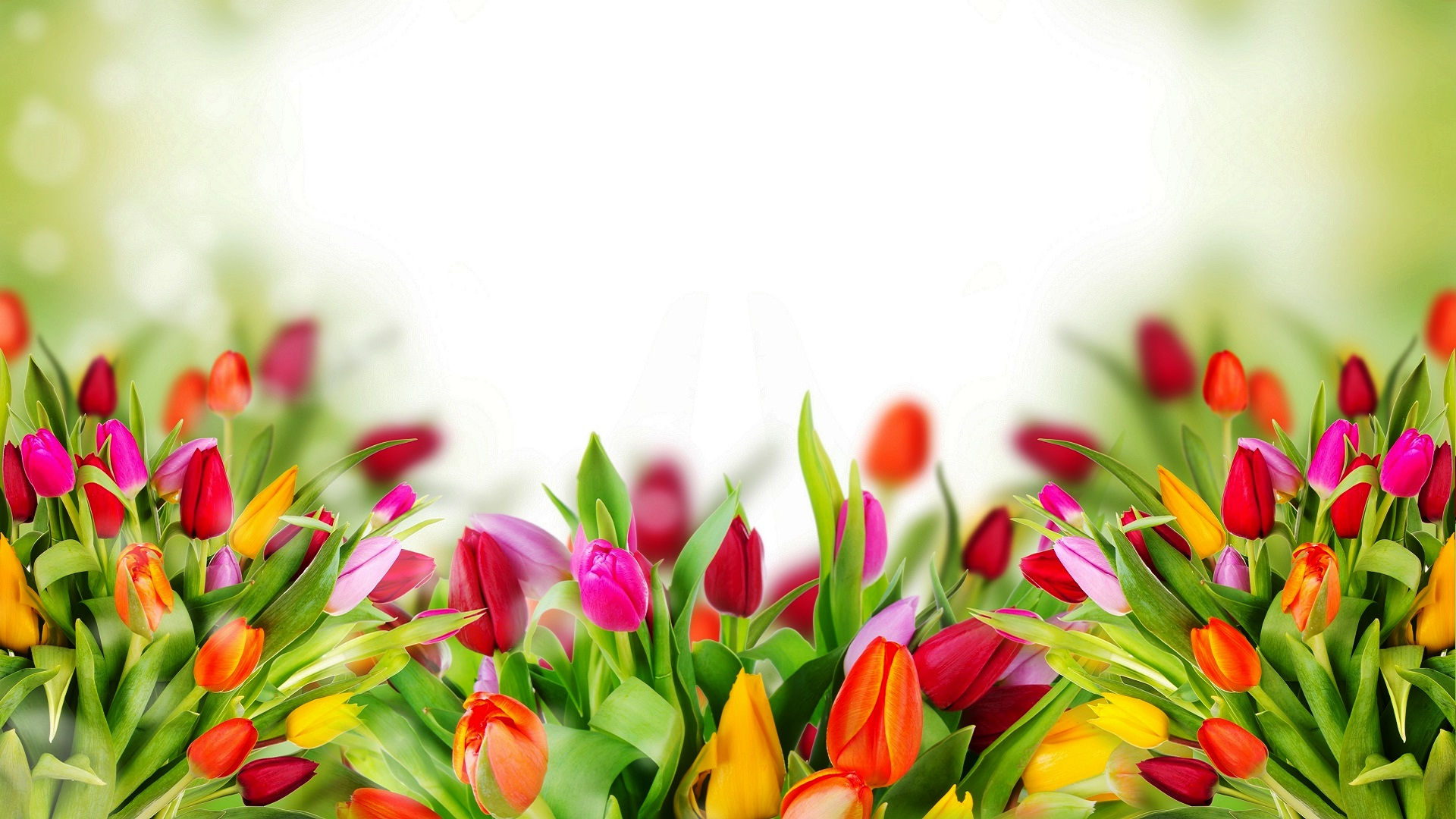 Free Colorful Flower Wallpaper Downloads: 1920x1080px Background Flowers Images