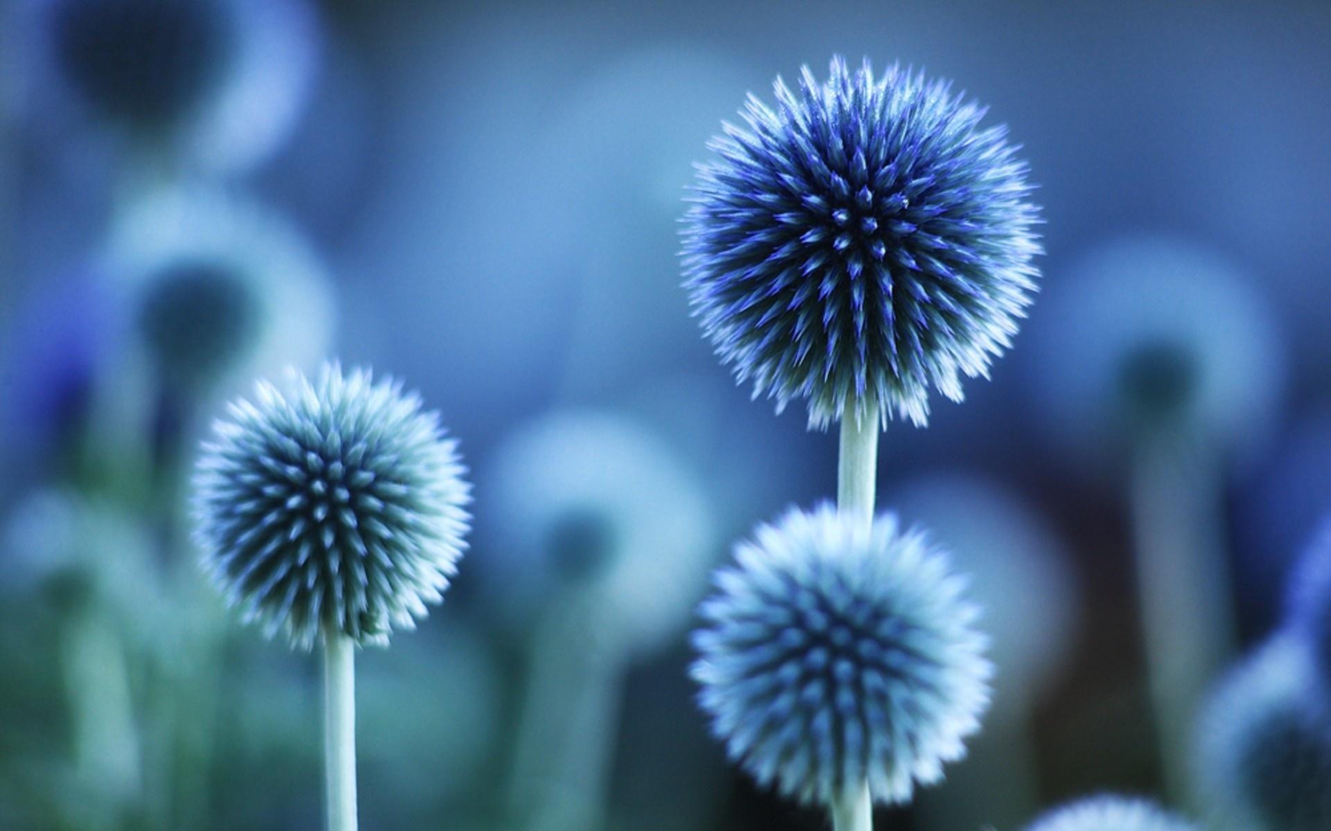 Blue Flower Wallpaper WallpaperSafari