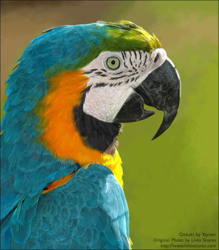 Realism Blue and Yellow Macaw by Yayster 700x800
