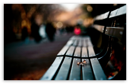 Save My Love For Loneliness HD desktop wallpaper High Definition 510x330