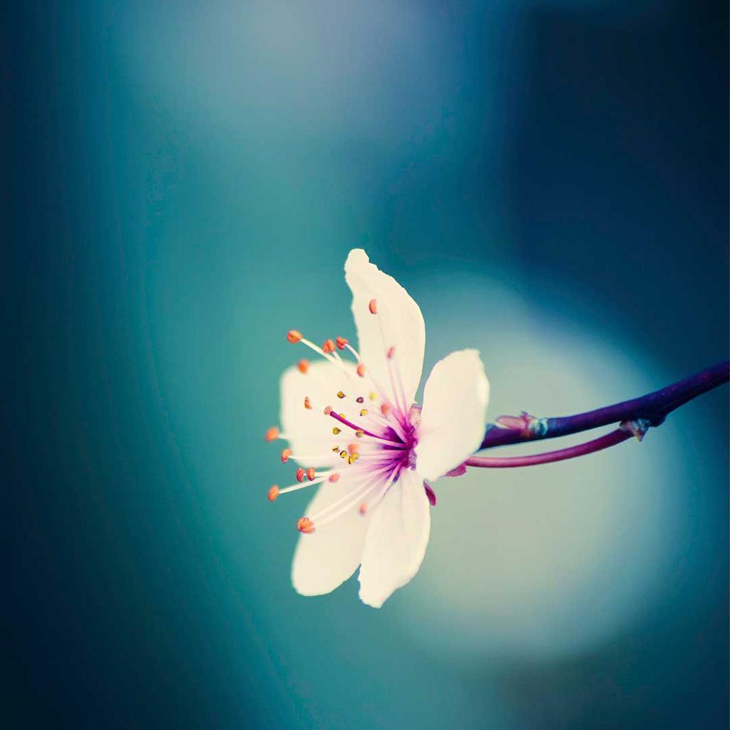 Spring Flower iPad Wallpaper   Download iPad wallpapers 1024x1024
