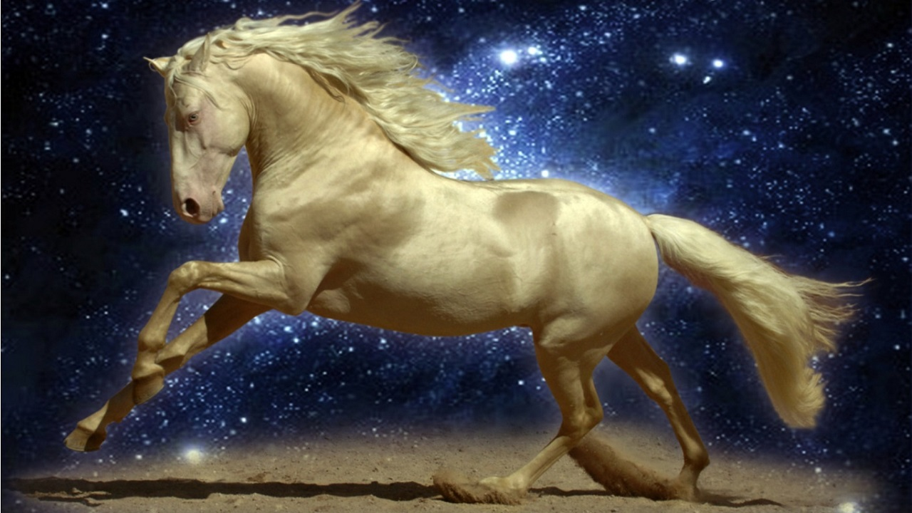 Horse Horses Live WALLPAPER Amazones Tienda Apps para Android 1280x720