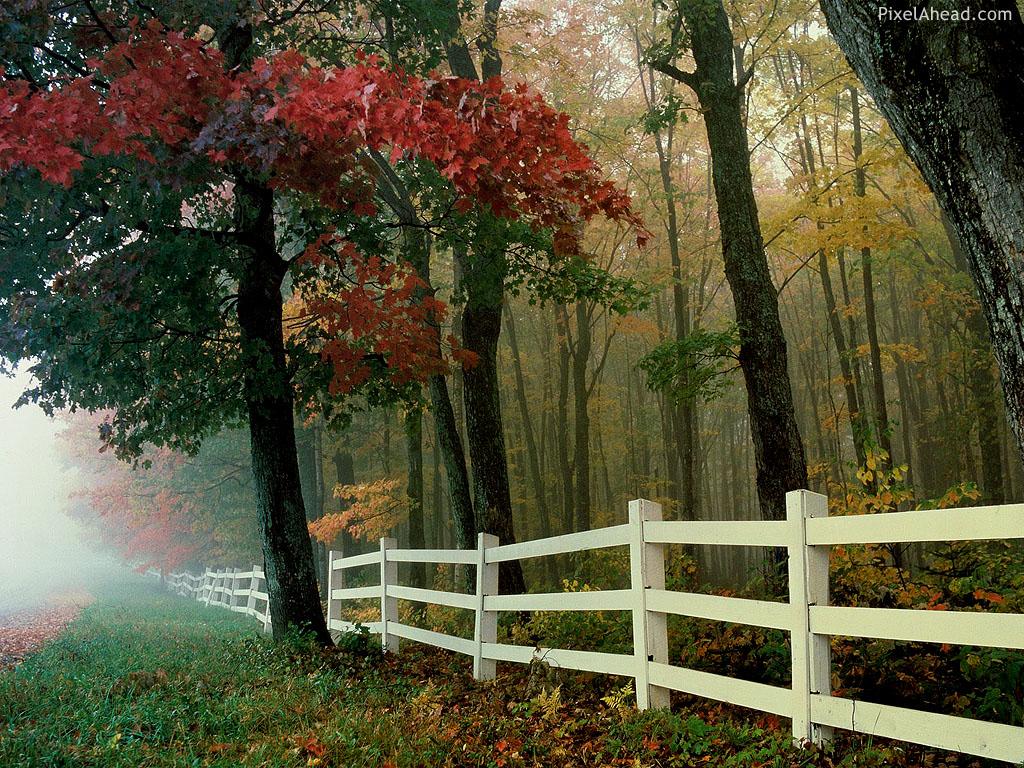 Autumn Nature Wallpaper Wallpapers Stocks 1024x768