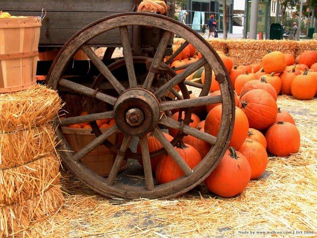 Fall Flowers And Pumpkins Wallpaper Fall secne pumpkins and hay 640x480