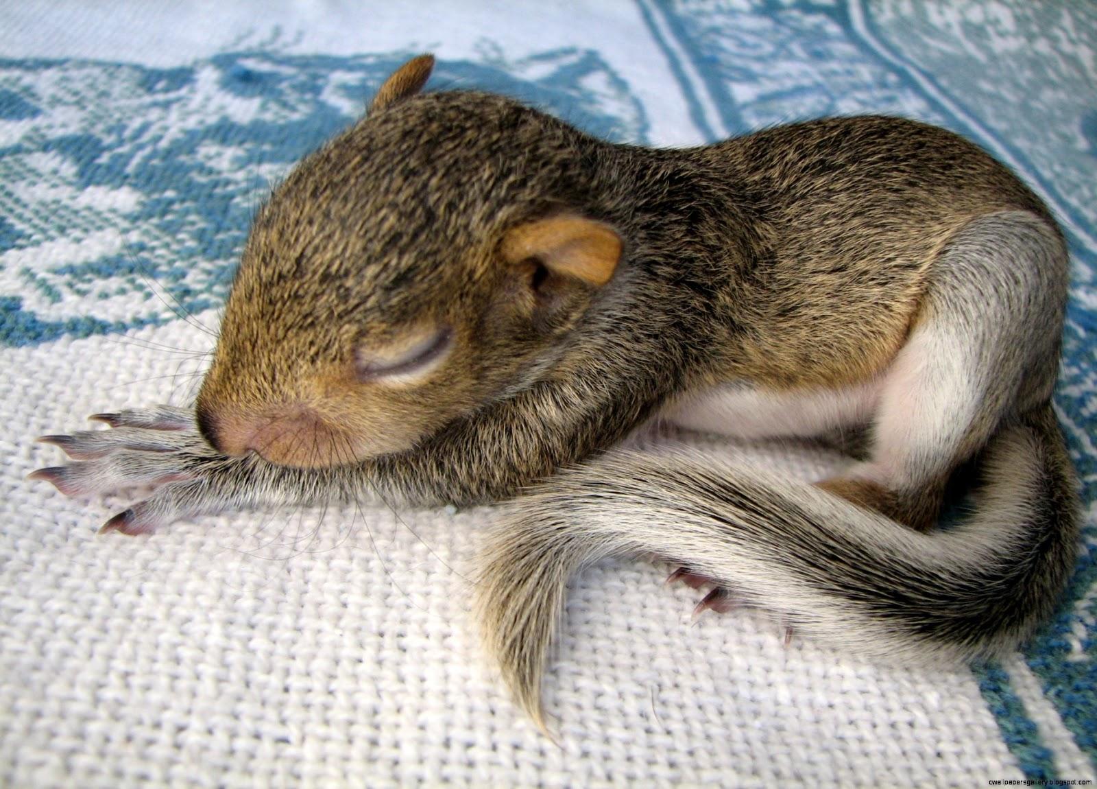 Baby Tree Squirrel | www.imgkid.com - The Image Kid Has It!