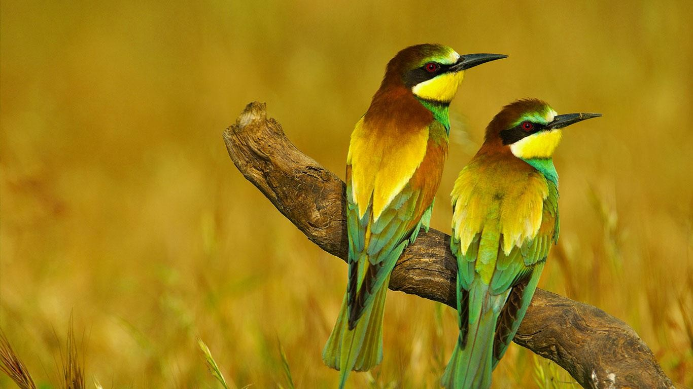 Bing 4k Wallpaper Birds Wallpapersafari