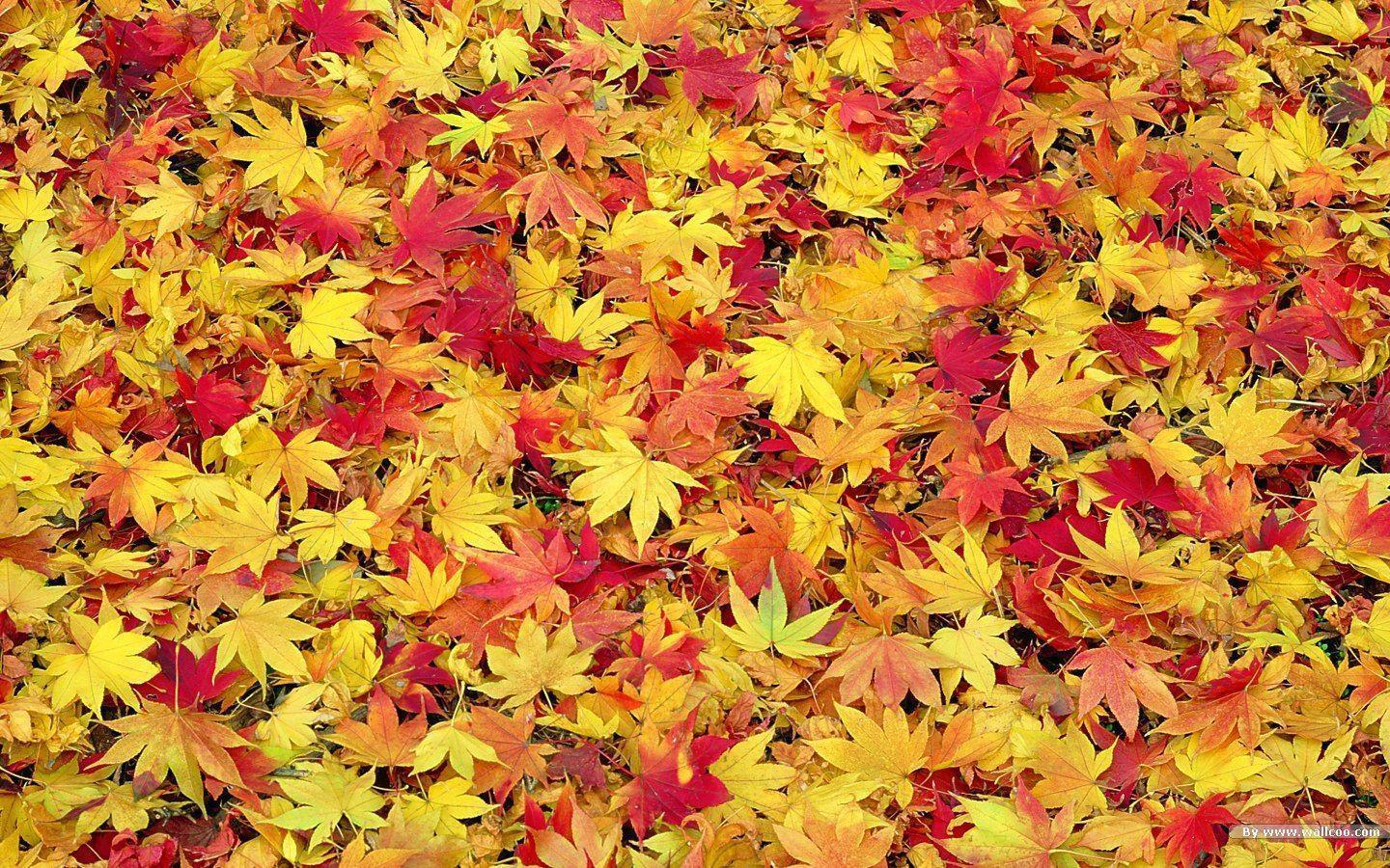 Fall Leaf Backgrounds 1440x900