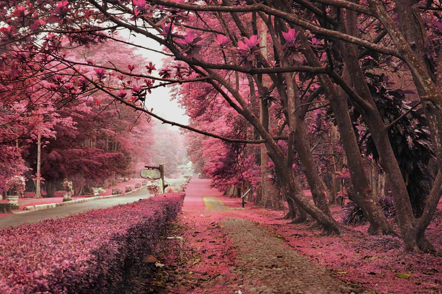 Pink Nature wallpaper   ForWallpapercom 909x605