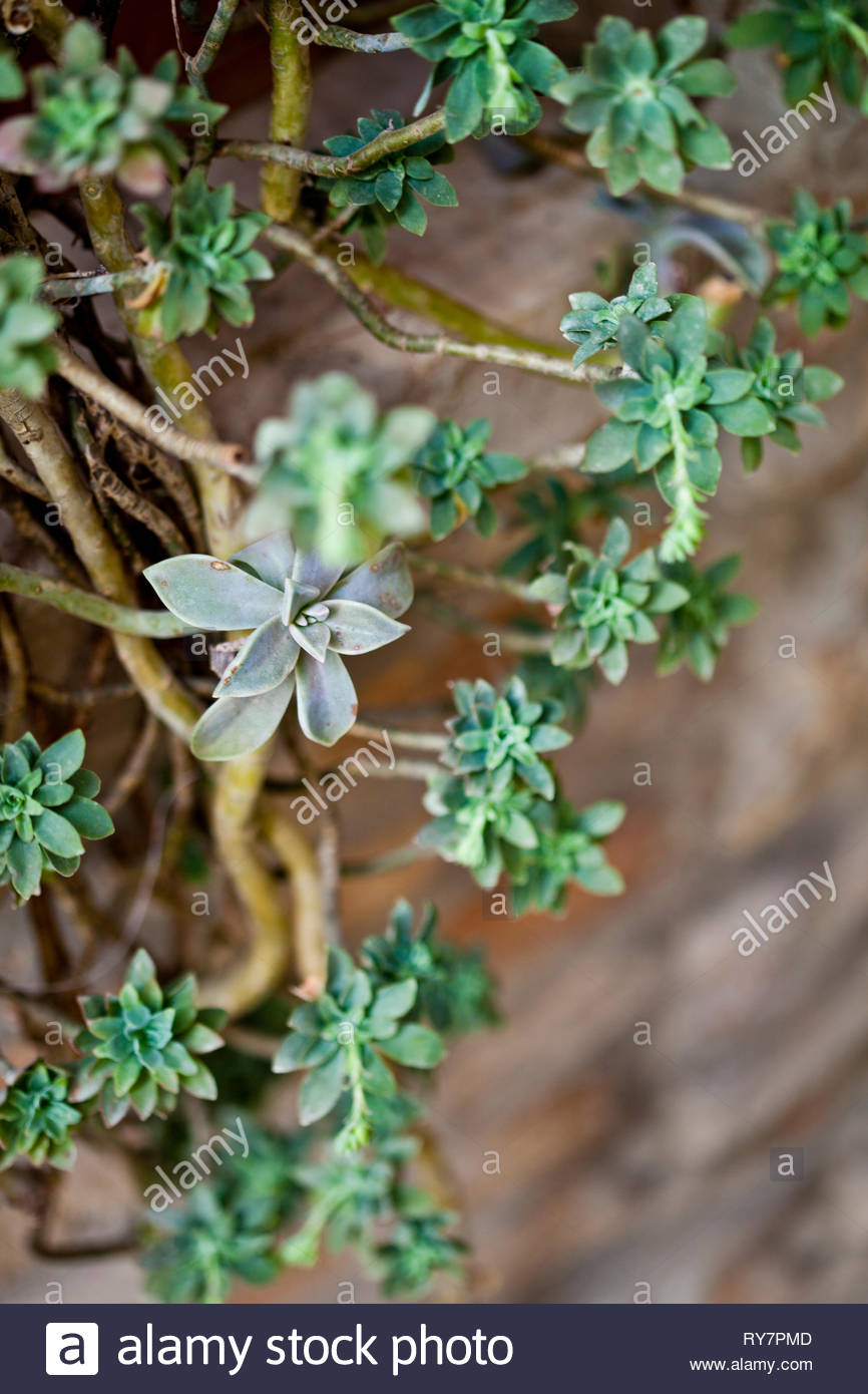 Hanging succulents closeup on brick wall background Stock Photo 866x1390