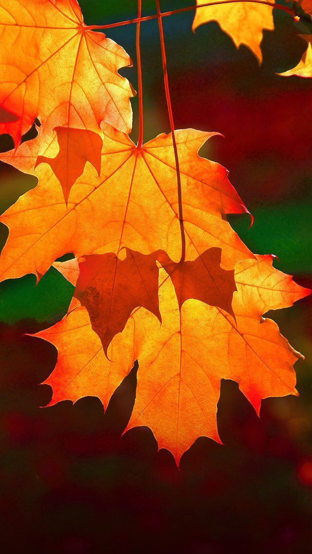 69 Beautiful Autumn Wallpaper On Wallpapersafari