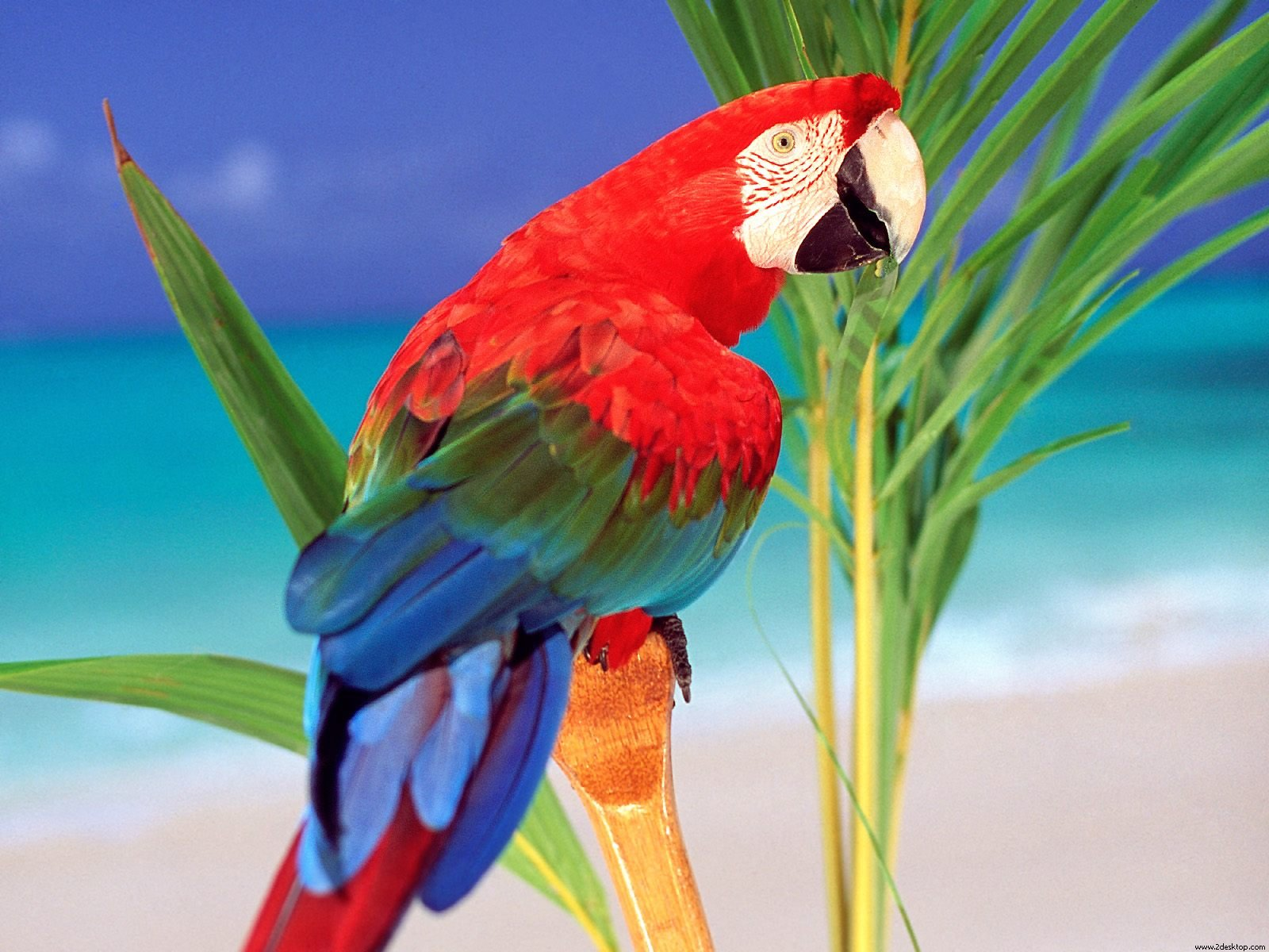 Different types and colors Parrots bird hd video 1600x1200