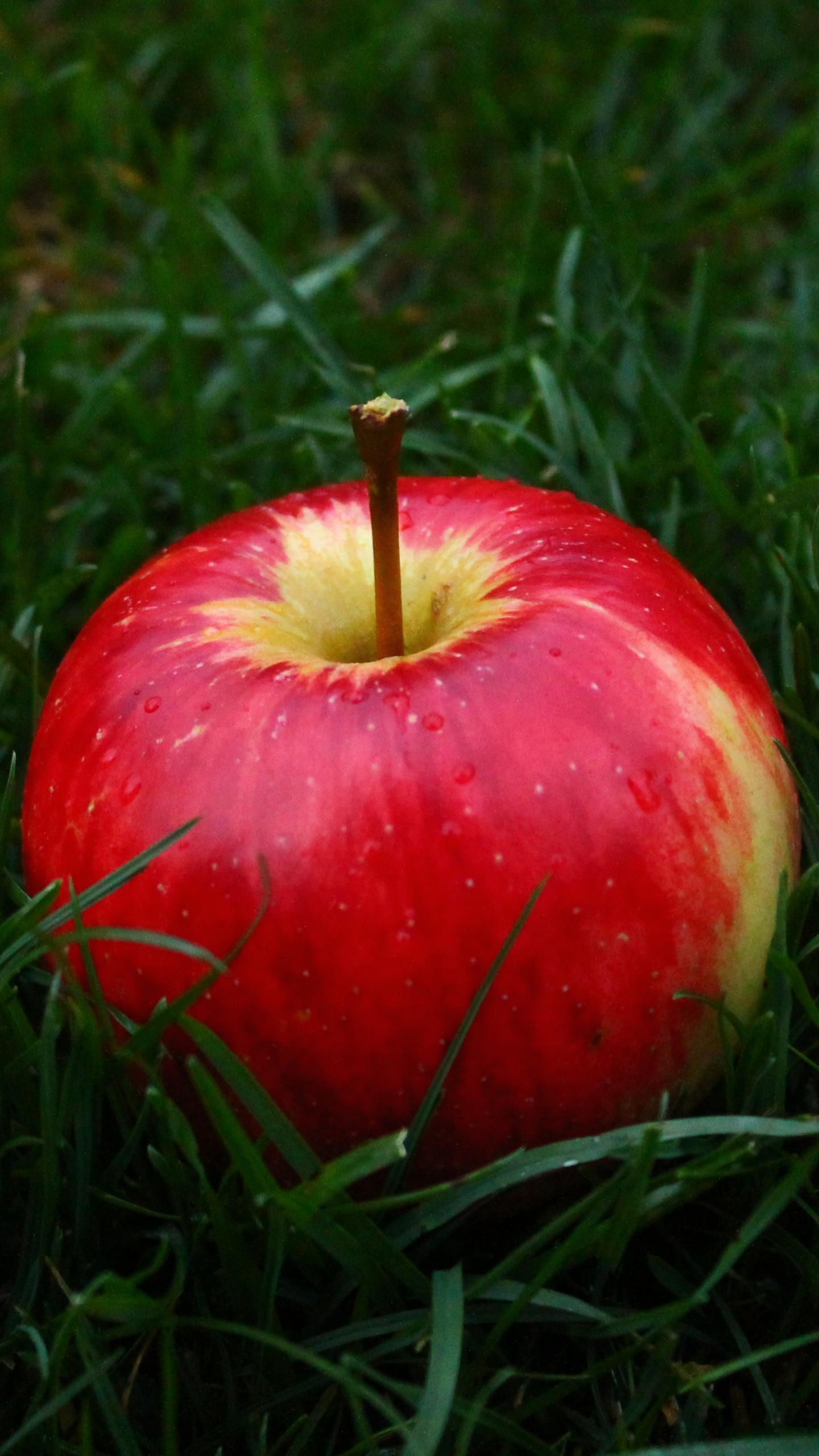 Download Wallpaper 1440x2560 Apple Fruit Grass QHD 1440x2560