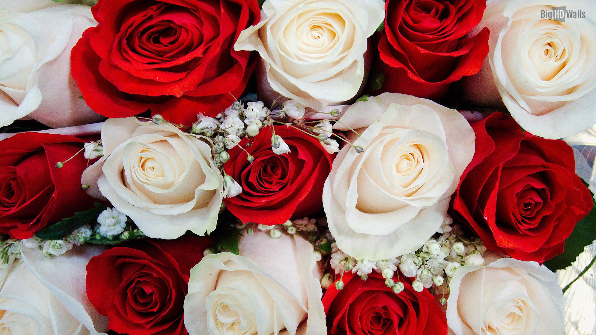 roses wedding flowers hd wallpaperjpg 1920x1080