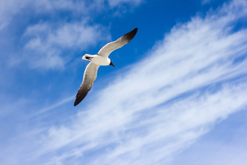500 Flying Bird Pictures Download Images on Unsplash 1000x667