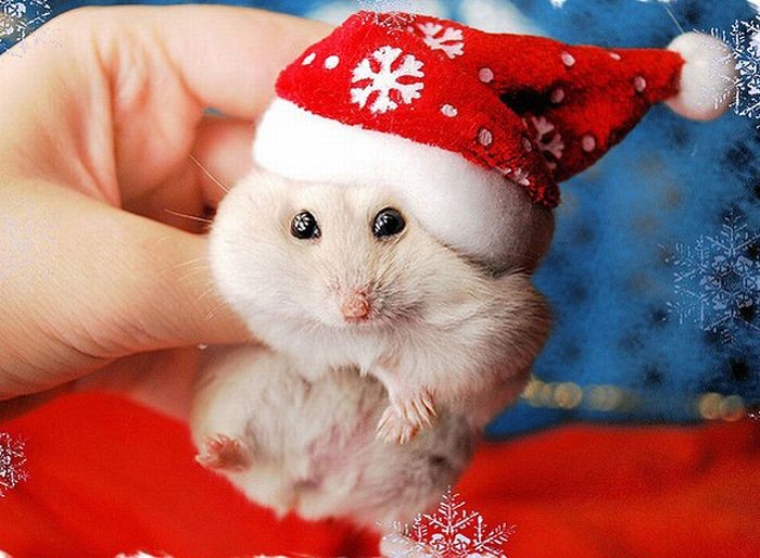 Christmas Animals Wallpaper 700x514