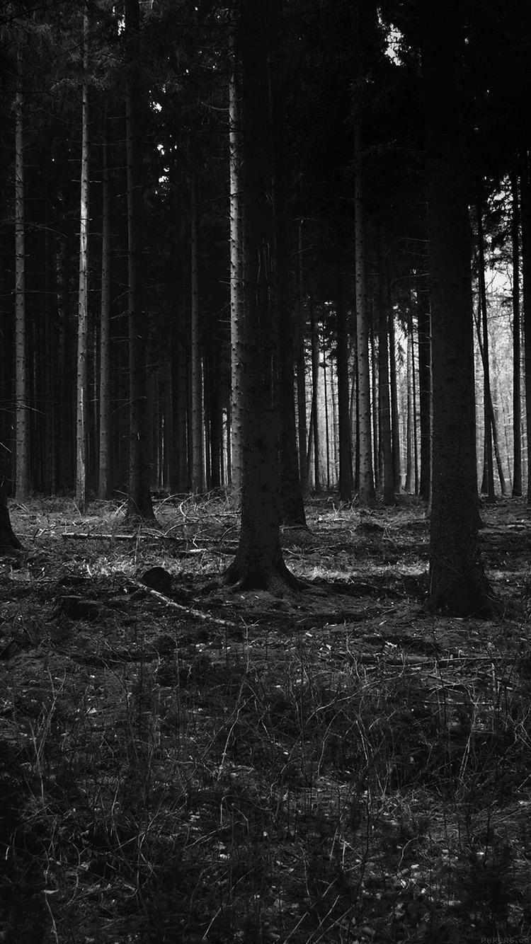 Free Download Forest Dark Scary Night Trees Nature 750x1334 For
