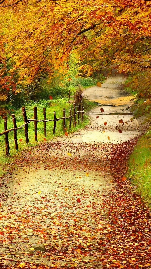 Beautiful Path Nature iPhone Wallpaper 640x1136