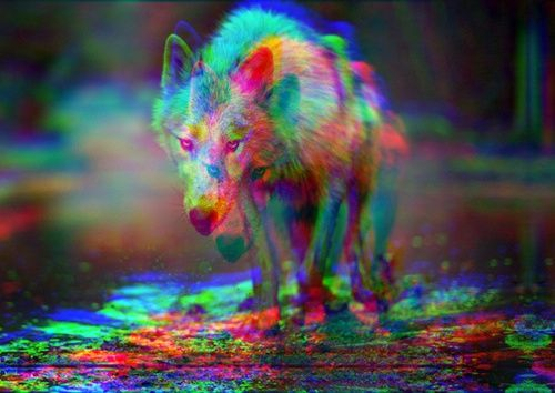 Trippy Wolves by matilda4456 500x354