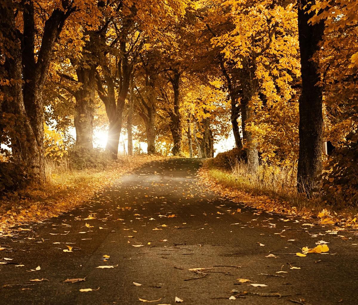 free 1200X1024 autumn roadway 1200X1024 wallpaper screensaver preview 1200x1024