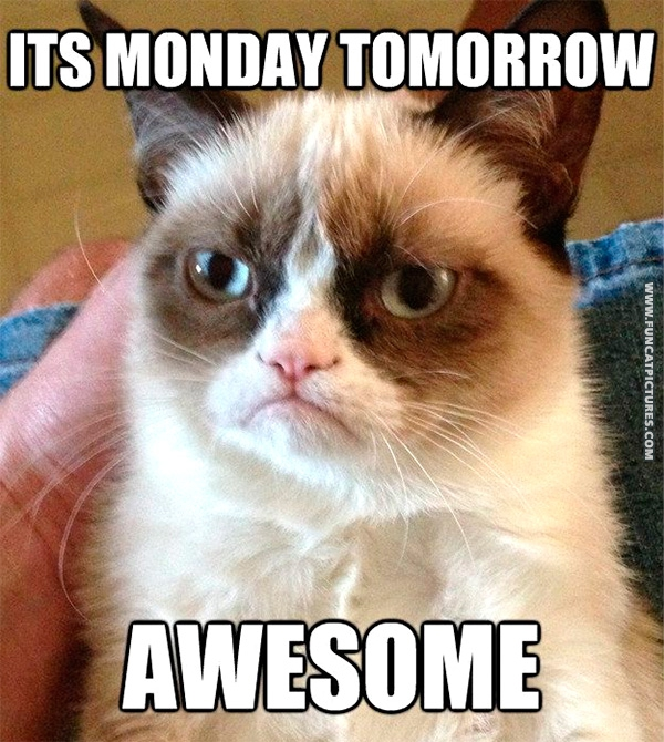 Grumpy is the only one that loves mondays Fun Cat Pictures 600x670