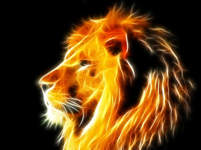 Colorful Lion Wallpaper Lions 1024x768 wallpaper 800x600