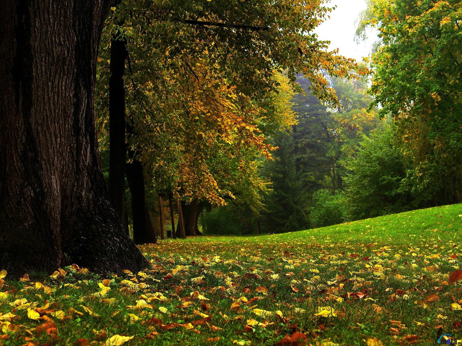 Download Wallpaper Early autumn 1600 x 1200 Desktop wallpapers and 1600x1200