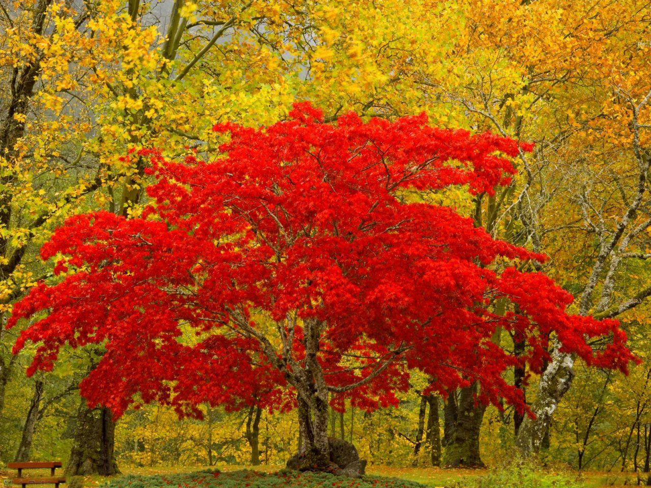 Only Nature Beautiful Tree Wallpapers 1280x960