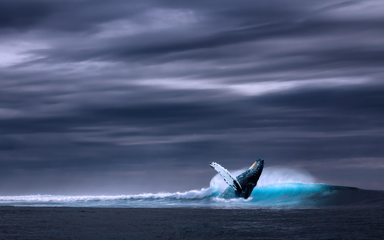 Humpback Whale in Ocean Waves Wallpaper 183 HD Wallpapers 2880x1800