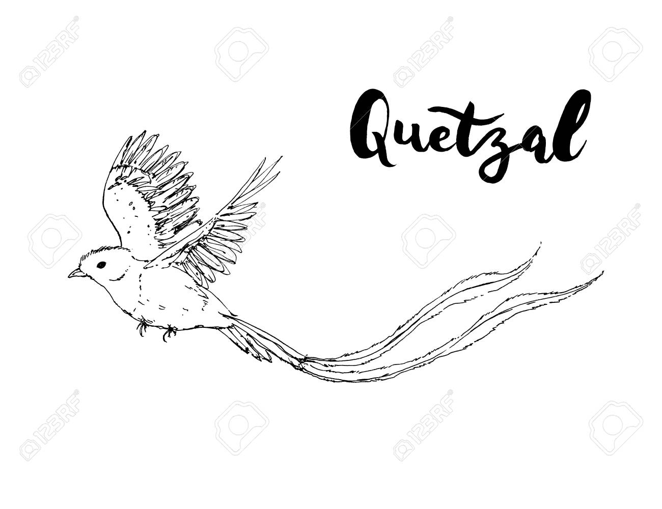 Hand Drawn Graphic Isolated Bird Quetzal With Handwritten Words 1300x1000