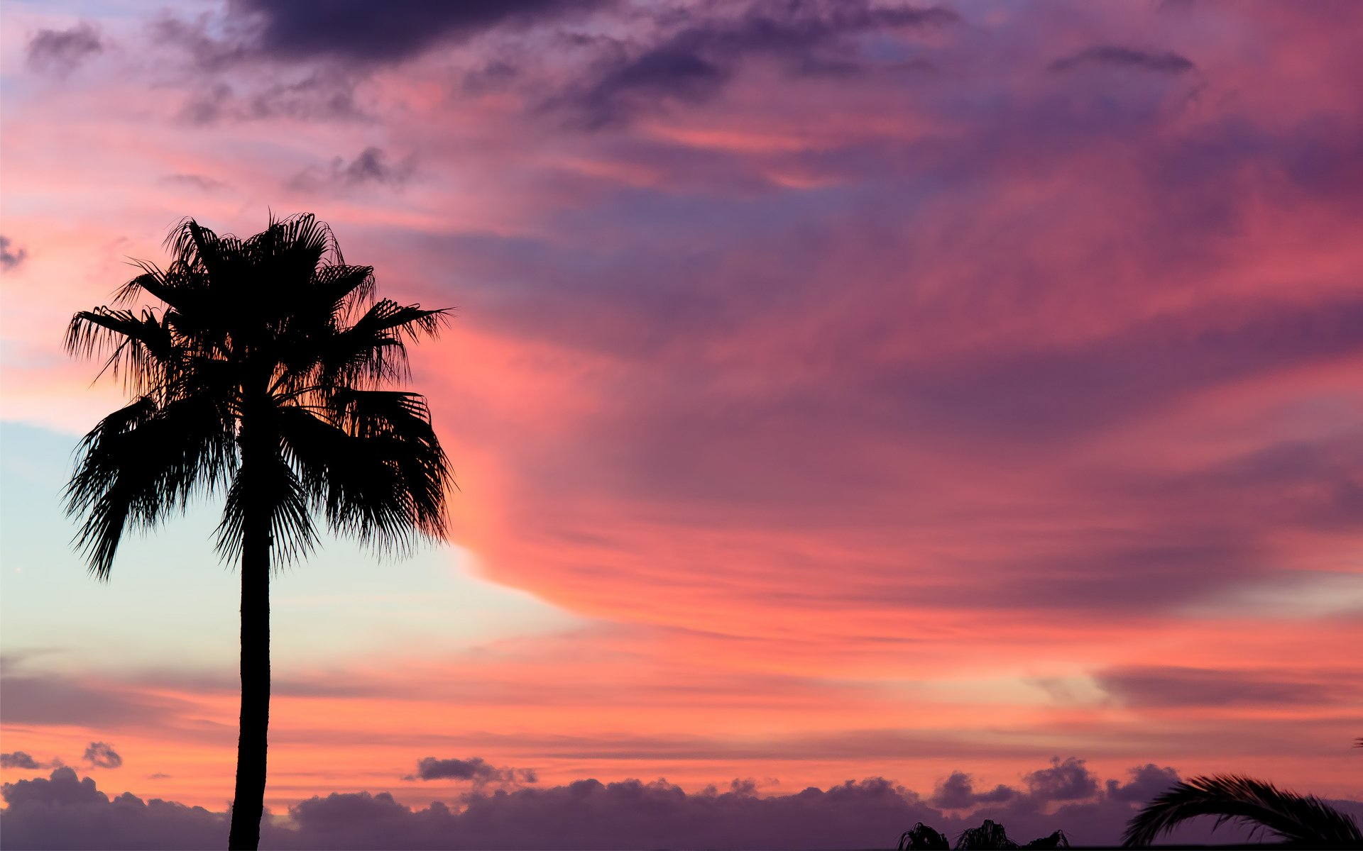 Sunset sky clouds palm trees wallpaper 1920x1200 71501 1920x1200
