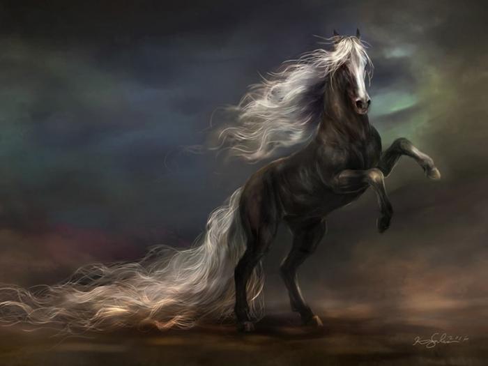 Black and white horse horses wallpaper Gsterim 387 700x525