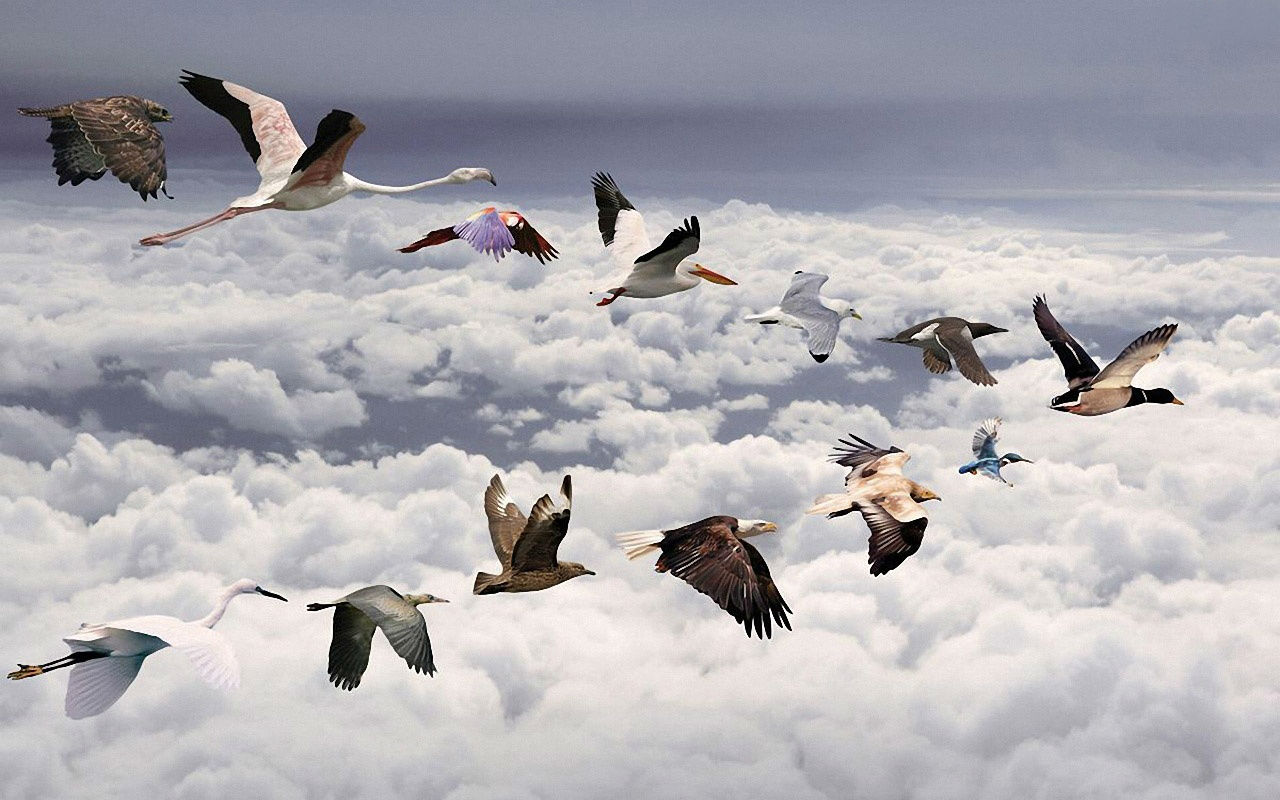 download flying bird wallpaper which is under the birds wallpapers 1280x800