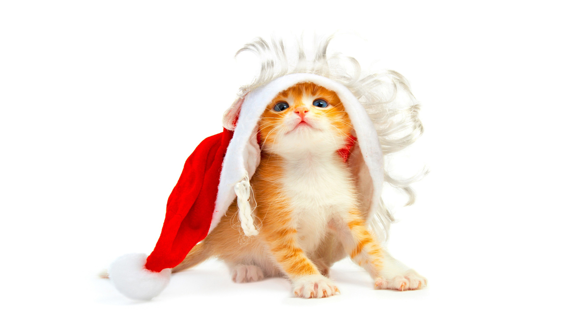 Cat   Download Cute Christmas Cat HD Wallpapers for iPhone 5 1136x640