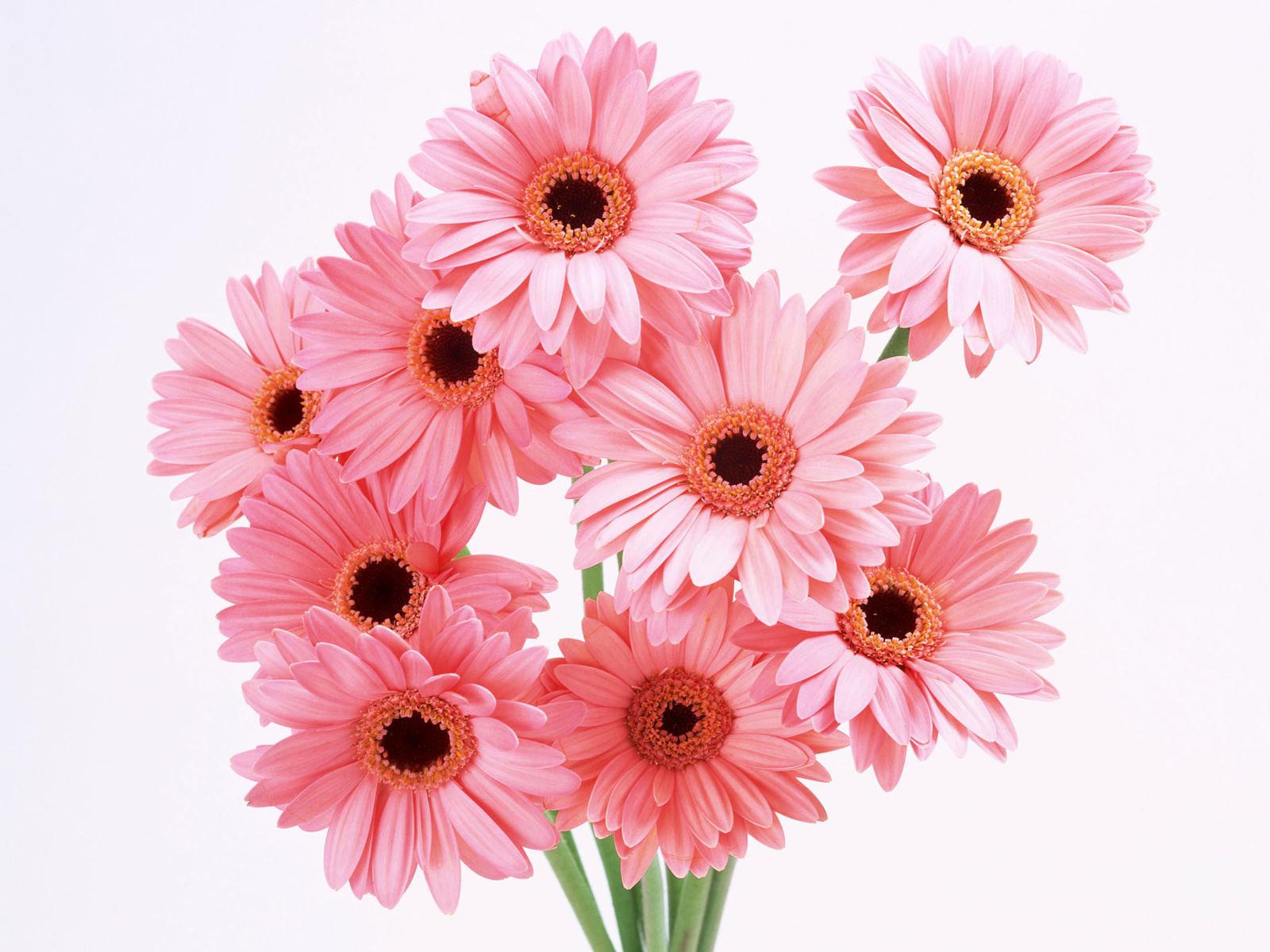 flowers for flower lovers Flowers wallpapers HD desktop 1600x1200