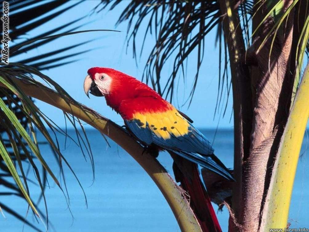 Parrot Backgrounds   Twitter Myspace Backgrounds 1005x754