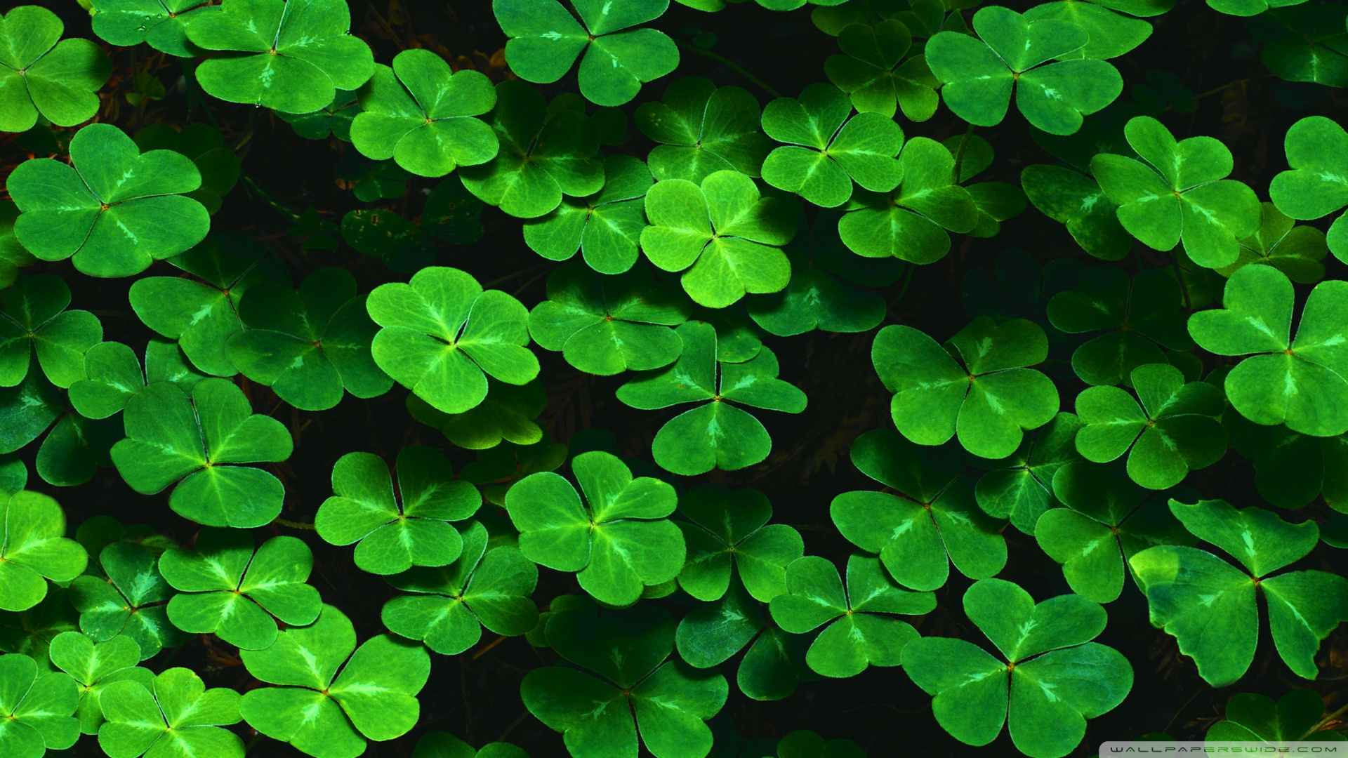 Irish Clover Background Irish clover b 1920x1080