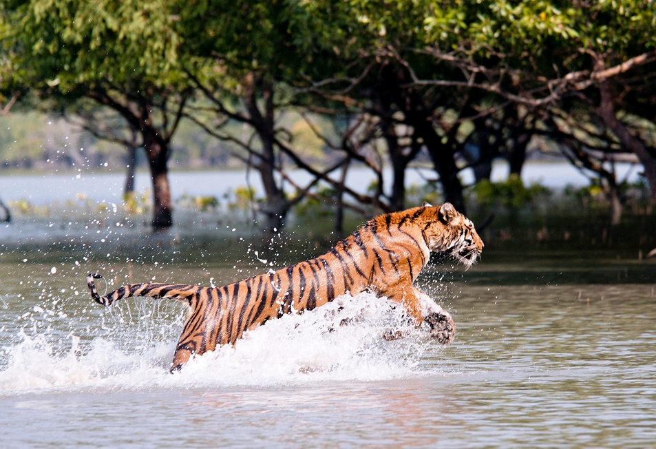 Sunderbans National Park 953x652