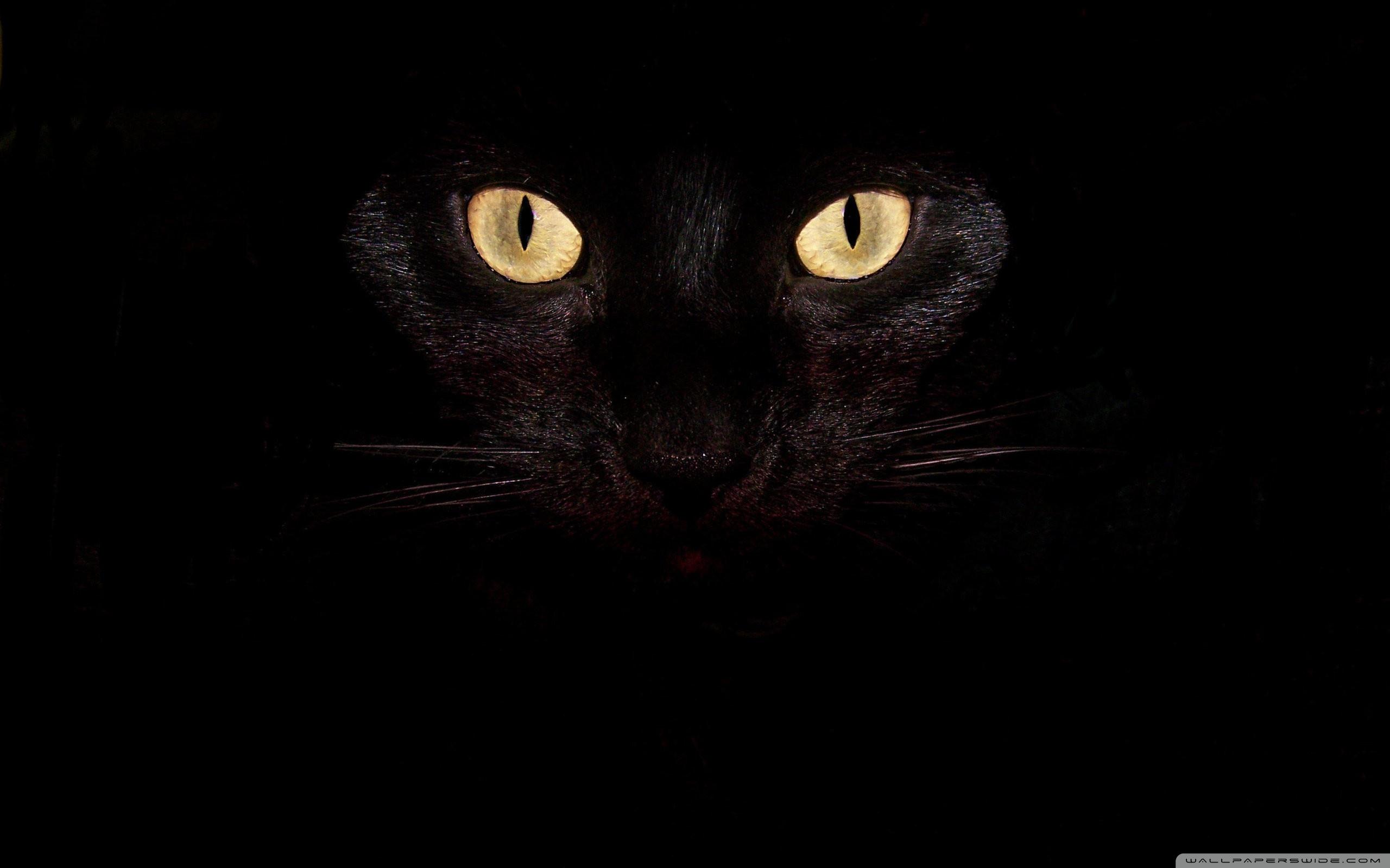 Black Cat Eyes 4K HD Desktop Wallpaper for 4K Ultra HD TV 2560x1600