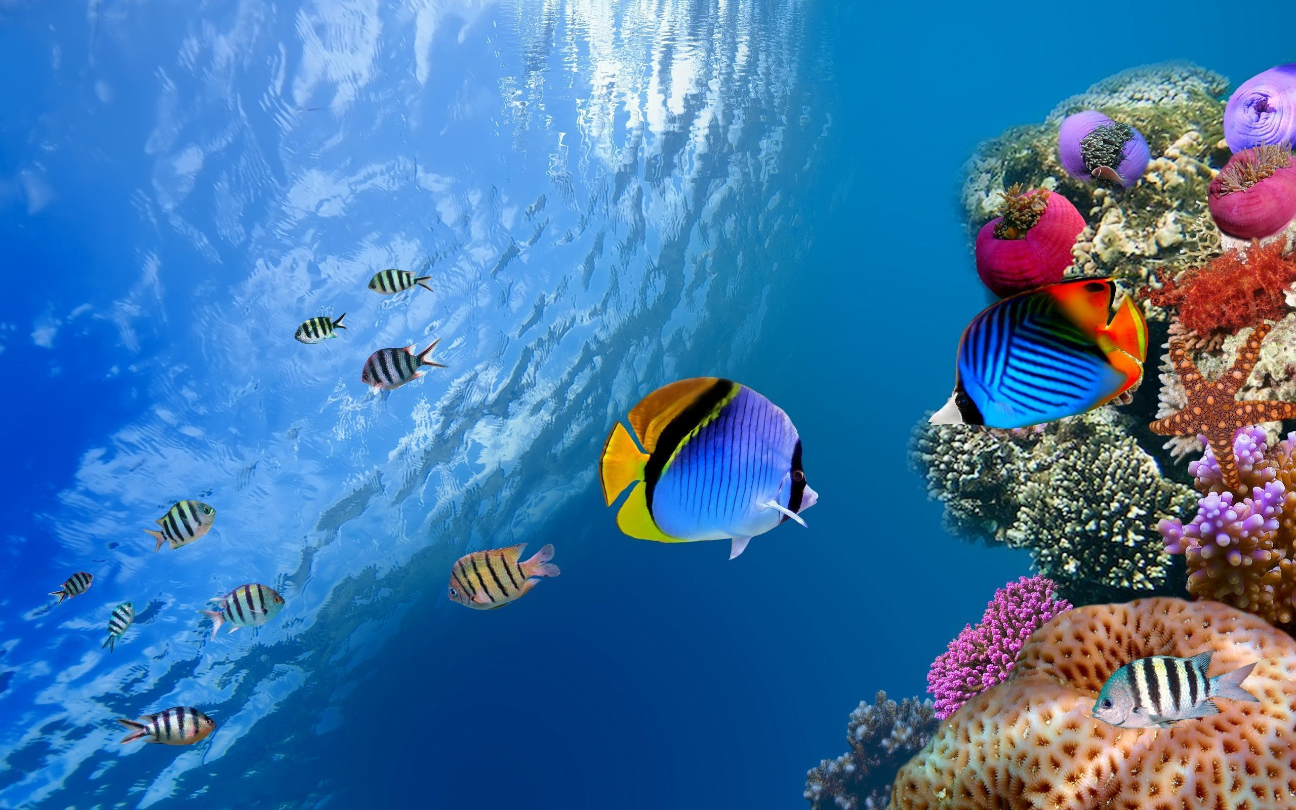 Corals And Fishes HD Wallpaper Nature Wallpapers 2560x1600
