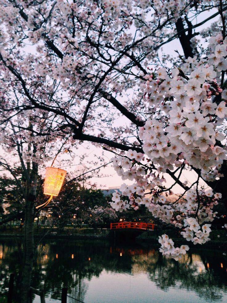 Hanami cherry blossoms festival in Nagoya Japan sakura japan 736x981