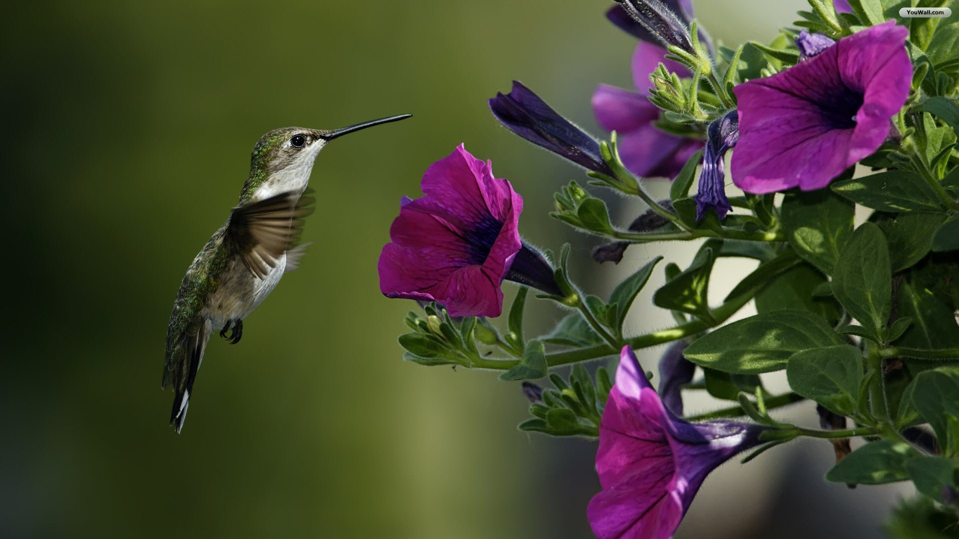 Download Image Images Birds Flowers Wallpaper 1920x1080 Full HD 1920x1080
