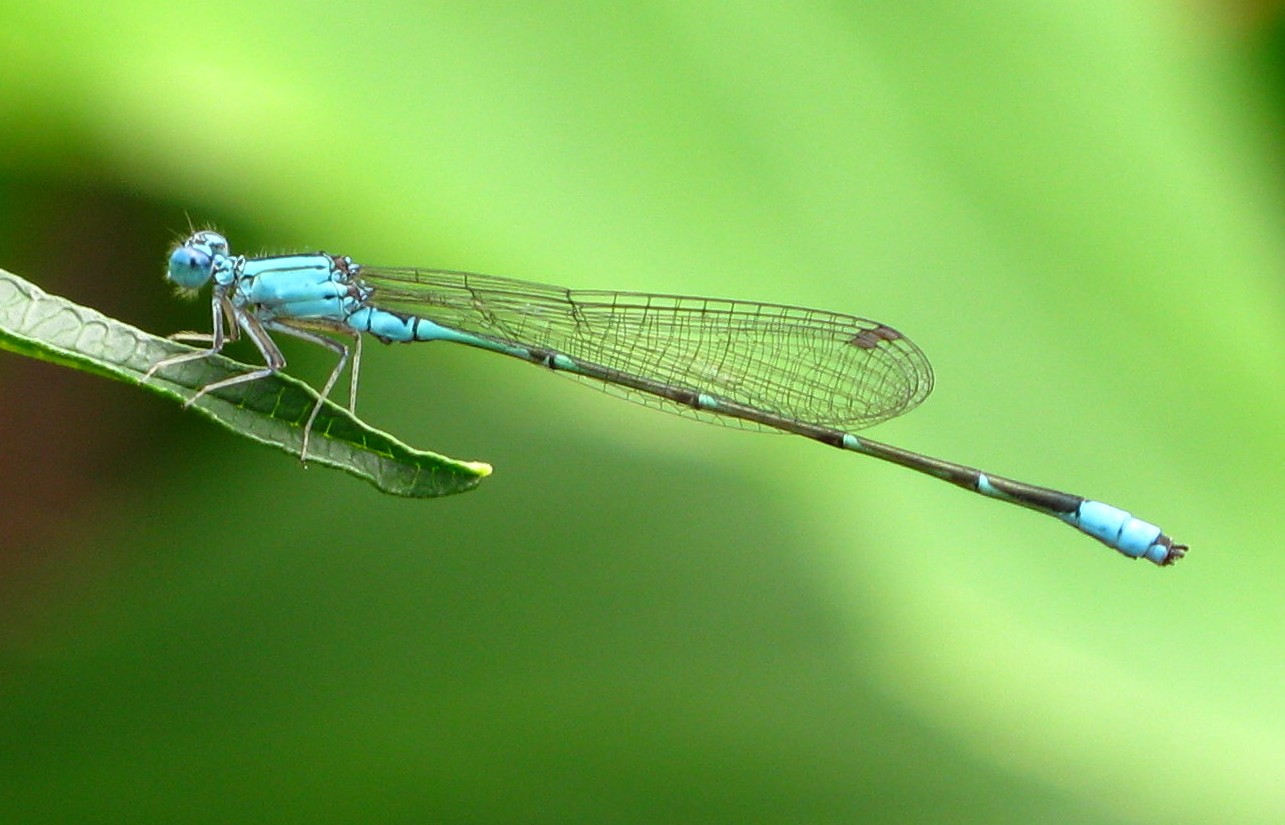 Dragon fly wallpapers Neptunes Dreams 1285x825