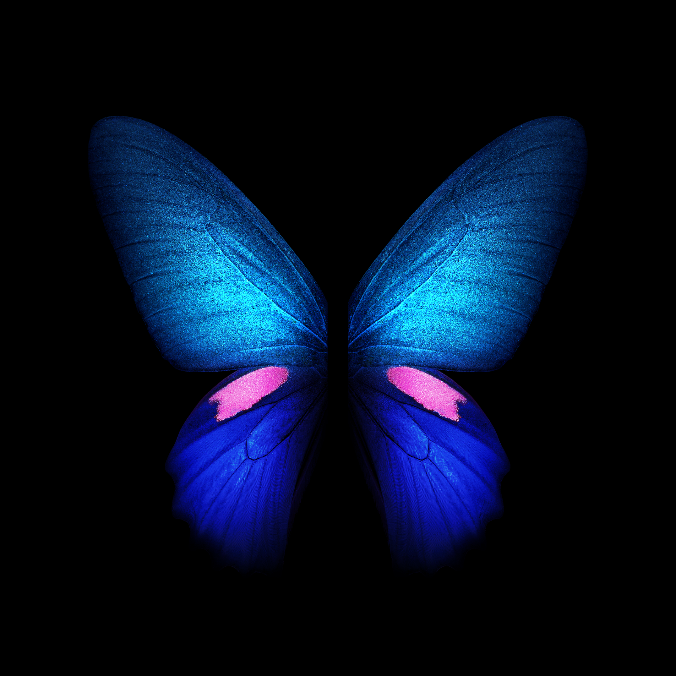 Download Samsung Galaxy Fold wallpapers in full resolution right here 2152x2152