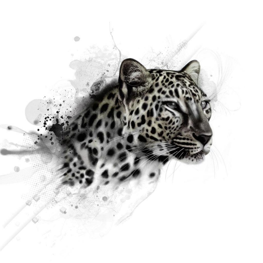 Black Leopard Backgrounds wallpaper Black Leopard Backgrounds hd 1024x1024