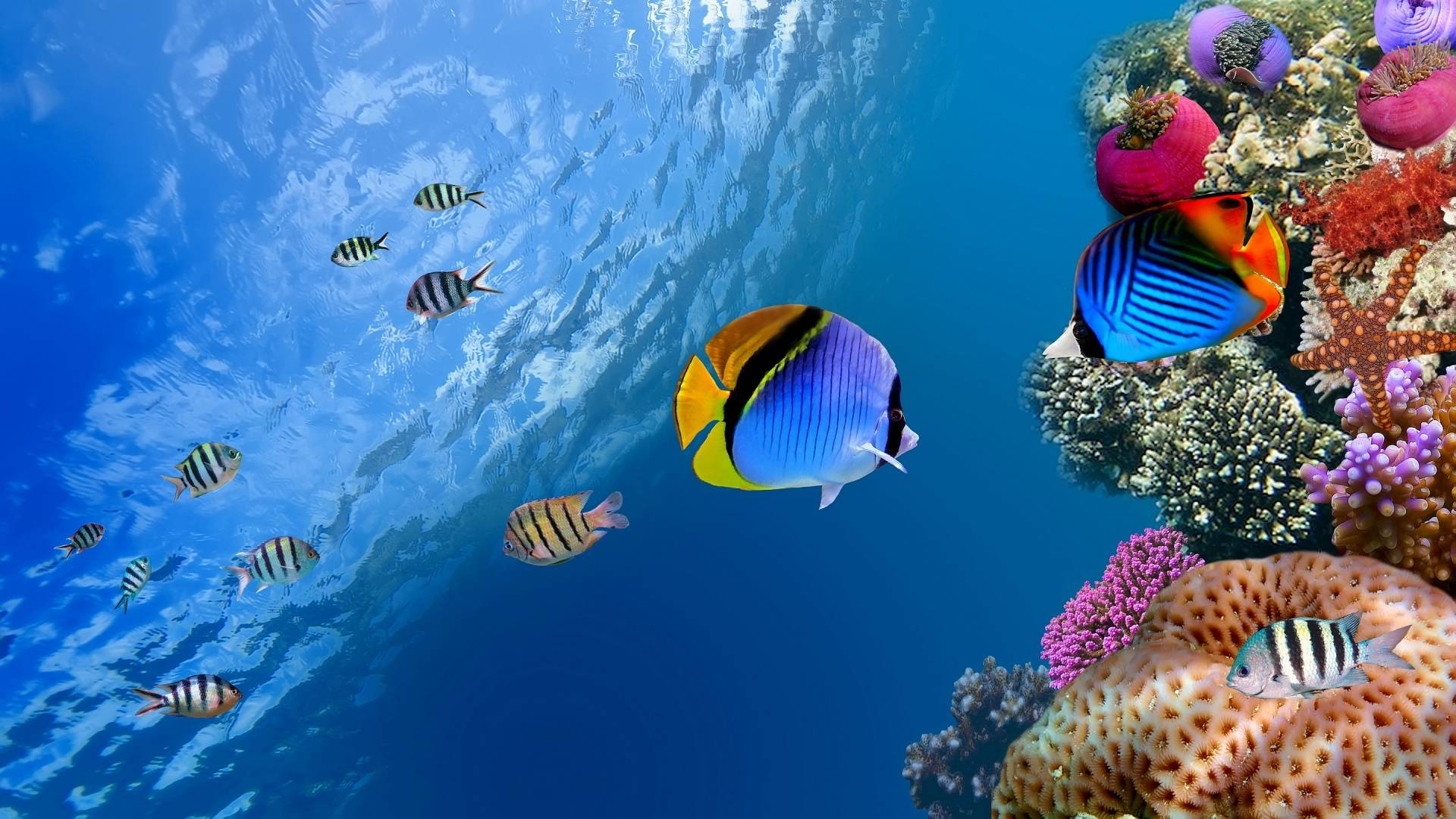 hd live fish wallpaper hd moving fish wallpaper 1920x1080
