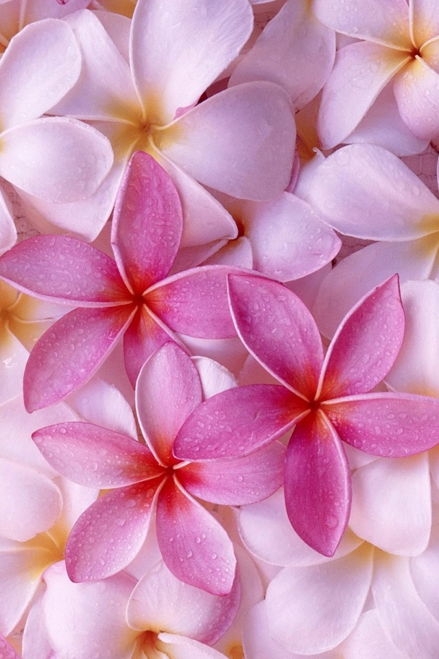 pink spring flower wallpaper