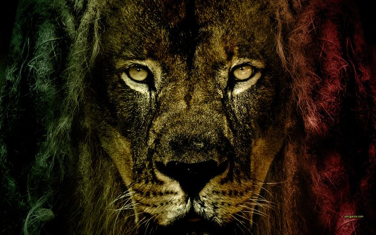 Wallpaper Reggae D Lion Of Judah Wallpapers Wallpaper 736x460