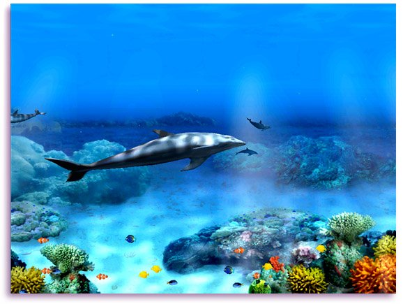 48 free animated dolphin screensavers wallpaper on - Animated screensavers for windows 10 ...