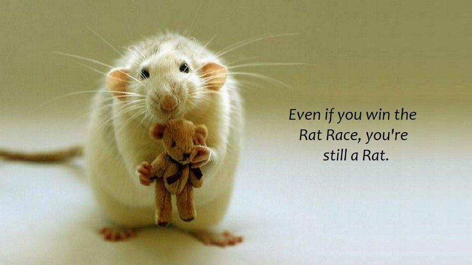 rat race wallpapers - photo #8